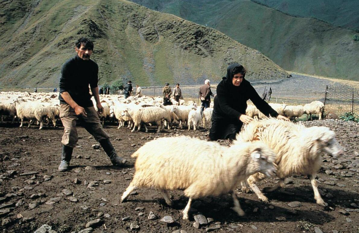The mountain pastures are utilized for sheep farming.