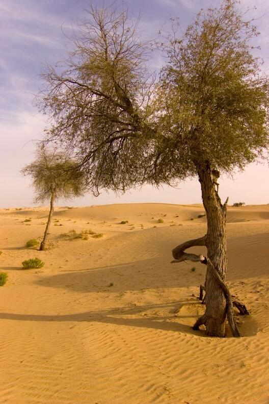 Large parts of the hinterland consist of desert