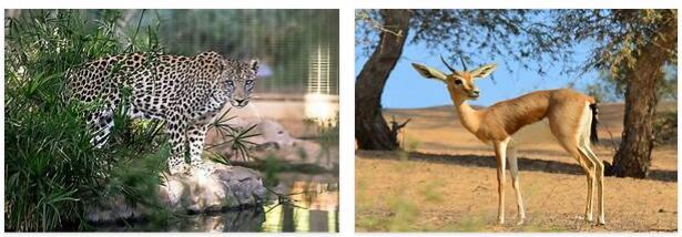 United Arab Emirates Animals