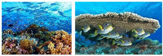 Tubbataha Reef Natural Park (World Heritage)